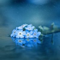 Misty blue by EliseEnchanted