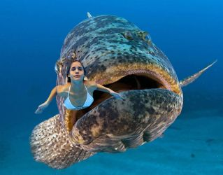 Vore Manip: Goliath Grouper behind diving girl by wsaef