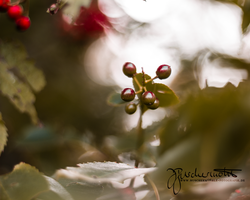 Red Lady by buschermoehle-photo