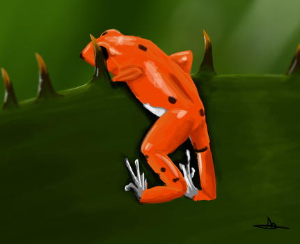 356 - Red Frog by Shasel