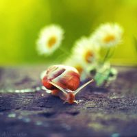 lovely snail by all17