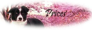 GirlyGirl BC Header PRICES by Wolfs-Hybrid