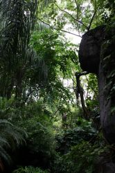 It's a Jungle by cynstock