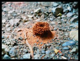 Mini Anthill by Francr2009