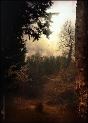 A path through the woods by Vittorio-Pellazza