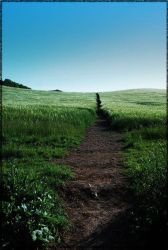 :: A path to nowhere :: by synergia