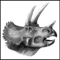 Triceratops horridus portrait by highdarktemplar