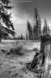Coyote Valley-C53-0714 bw-2 by abstractcamera