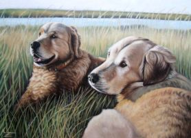 Two Golden Retriever by ArtsandDogs