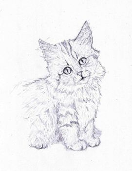 Norwegian Forest Cat | Pencil Drawing by TheMasterofSuicide