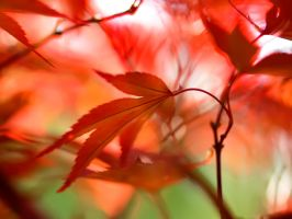 Red leaves 2 by valeriemonthuit