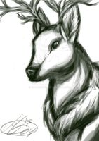 Deer by Mallemagic