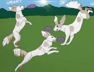 Calypso Disk dog titles by Waggintails-Rescue