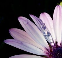 droplets2 by dragorien