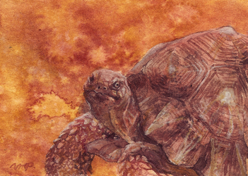 aceo tortoise by kailavmp