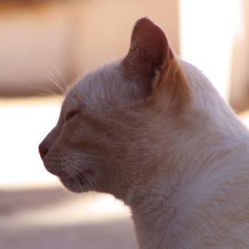 Cat's profile by Oddslane