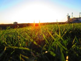 Grass with Sunset by Daisydog8
