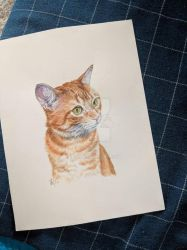 Cat Oliver by ir-2