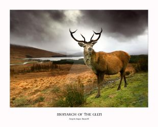 Monarch of the Glen by ArwensGrace