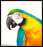 Parrot Color Portrait by toxicdesire
