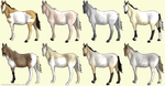 CLOSED Free Horse Adopts by lionsilverwolf