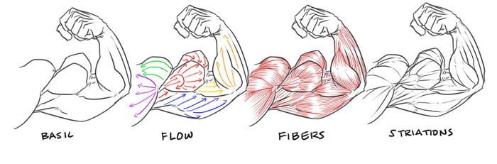 bicep flex definition guide by NewberryChucks