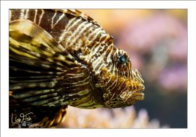 LionFish by sG-Photographie