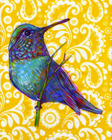 hummingbird illustration by bialykots