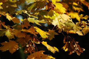 Leaves 2 by Holowood