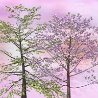 Blooming Trees by oldhippieart