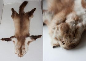Marten pelt for sale by Kyasanuri