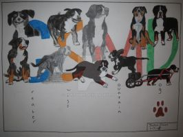 Greater Swiss Mountain Dog word art drawing by Justyn16