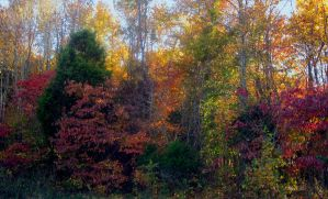 Because I Love Autumn I by Mistshadow2k4