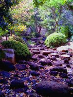 Stepping Stones of Life by x-louisee-richo-x