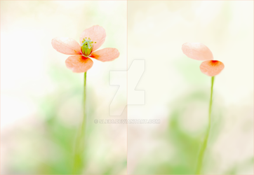 Secretly Blooming - Progress Comparison Picture by sle86