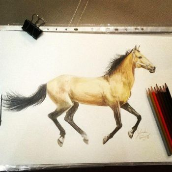 Horse-Color pencil by mustangart