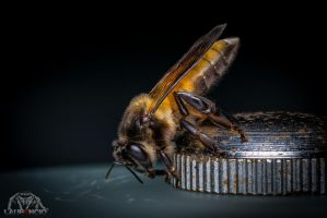 Bee by Anrico