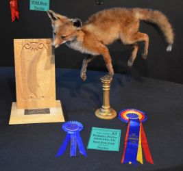 NZTA Results by LuxTaxidermy