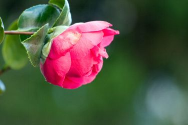 stereotypical flower photo by uncherished