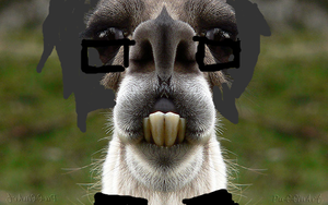 Claude The Misfit Llama by SuperAwesomeBocchan