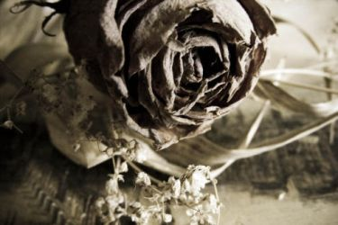 Truth Beneath the Rose by blu-pisic