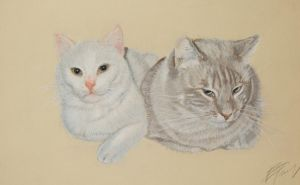 Cats by riksons