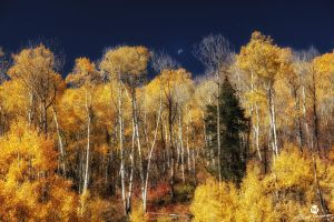 The Autumn Moon Above the Colors by mjohanson