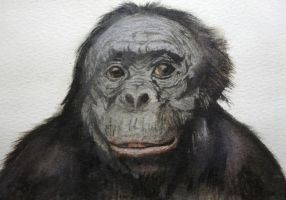 Monkey - Watercolor by Glaubart