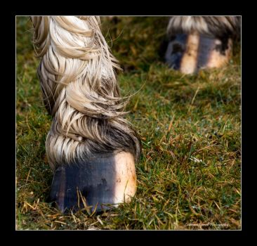 Best foot forward by LordLJCornellPhotos