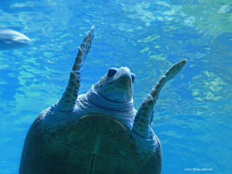 Turtle wave by Mogrianne