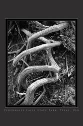 Twisted Roots by houselightgallery