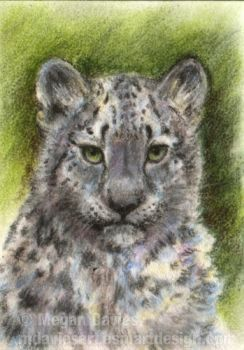 Snow leopard cub in pastel by Pannya