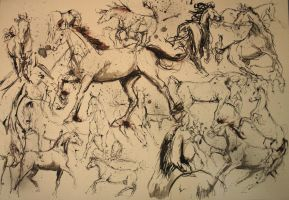 galloping sketches by martak92