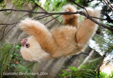 Hoffman's two-toed sloth by LisaToms